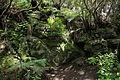 La Palma - Garafía - LP-1 - Parque Cultural La Zarza - La Zarcita 02 ies.jpg