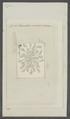 Lacinularia socialis - - Print - Iconographia Zoologica - Special Collections University of Amsterdam - UBAINV0274 101 04 0002.tif