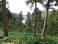 Lago superiore Glendalough 03.JPG