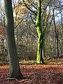 Lambridge Wood - geograph.org.uk - 626598.jpg