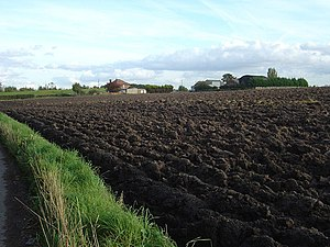 Loam - Fine, loam-rich field ideal for farming vegetables in the UK