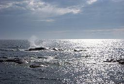 Östersjön vid Landsort
