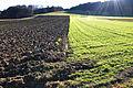 Landwirtschaft am Rande des Torfmoors.jpg