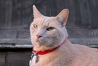 Larry the cat posing on the roof (DSCF7128).jpg