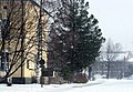 Lasaretinsaari Oulu 20080324.JPG