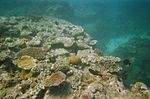 Australian Opposition Leader pledges to save Great Barrier Reef