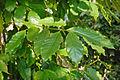Le Jardin botanique de Palerme (7042396979).jpg