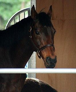 Legacy World Japanese-bred Thoroughbred racehorse