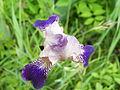 Leutratal-Iris-X-1316.jpg