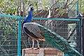 Limassol Zoo, Cyprus - panoramio.jpg