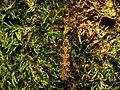Limoniid Crane Fly - Flickr - treegrow (1).jpg