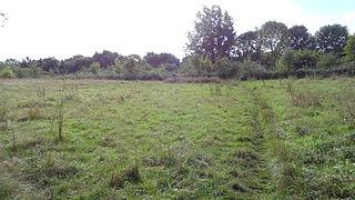 Linders Field