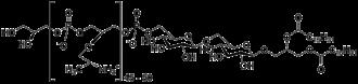 Lipoteichoic acid - Structure of the lipoteichoic acid polymer