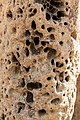 Litchfield National Park (AU), Magnetic Termite Mounds -- 2019 -- 3730.jpg