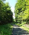 Loantaka Brook Reservation bikeway pathway curving into woods.jpg