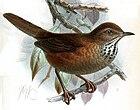 Картина с изображением коричневой птицы с черным пестрым белым горлом, сидящей на ветке