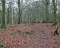 Lodge Plantation - geograph.org.uk - 1728116.jpg