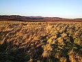 Looking NE towards Loch Dubh-ghruanach - geograph.org.uk - 105845.jpg