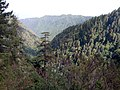 Looking down the mountains.jpg