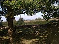 Looking towards Little Haresfield from Standish Church - geograph.org.uk - 1505436.jpg