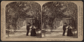 Lovers' Lane, Central Park, New York, U.S.A, from Robert N. Dennis collection of stereoscopic views.png