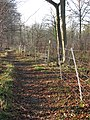 Lower Wood Nature Reserve - electric deer fence - geograph.org.uk - 1614938.jpg