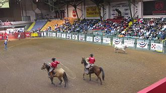 Cowtown Coliseum - Rodeo in progress at Cowtown Coliseum