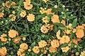 Macro Nature Flower Shots (211357713).jpeg