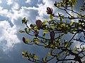 Magnolios en primavera - panoramio.jpg