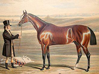Mameluke (British horse) - Image: Mameluke Derby winner