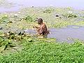 Man wading in lake in Burkina Faso, 2009.jpg