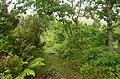 Marão Trail Adventure IX (41727936565).jpg