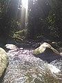 Mata ciliar - Floresta protetora 8.jpg