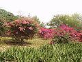 Mauritius8.JPG