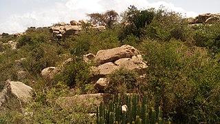 May Beati (exclosure) Exclosure for woodland restoration in Ethiopia