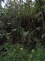 Medellin, Antioquia, Colombia - panoramio (7).jpg