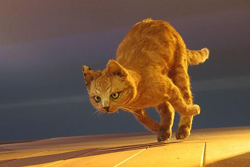 Meneer Zjeroen - Hunting Cat JachtPoes (by)