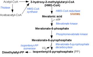 Phosphomevalonate kinase