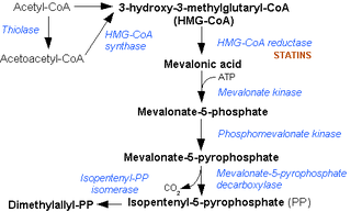 Hydroxymethylglutaryl-CoA synthase - Mevalonate pathway