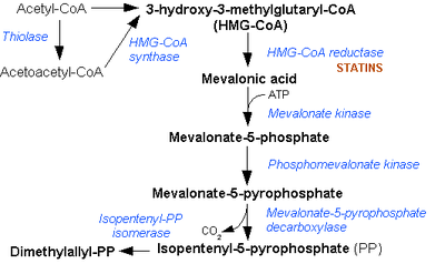 Mevalonate pathway.png