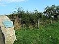Millennium oaks - geograph.org.uk - 260906.jpg