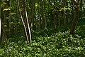 Millington Wood - panoramio.jpg