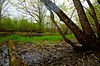 Milwaukee River Floodplain Forest.jpg