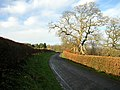 Minor Road at Mill Lands - geograph.org.uk - 287566.jpg