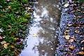 Mirror (230345763).jpeg