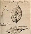 Miscellanea curiosa, sive, Ephemeridum medico-physicarum Germanicarum (1702) (14761249996).jpg