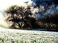 Misty Trees (3281618183).jpg