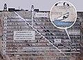 Modesto Varischetti scheme Ecomuseo Miniere Gorno.jpg