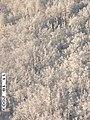 Moose Survey, Yukon-Charley, 2003 2 (8bf240e5-df2d-4389-bf29-e892092584eb).jpg