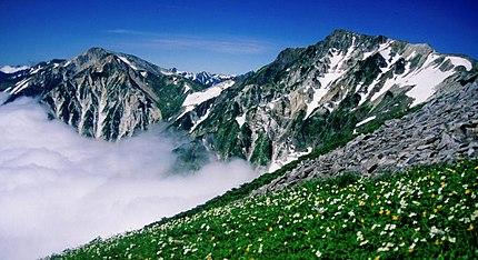 小蓮華山方面から望む白馬岳、雲海とハクサンイチゲとシナノキンバイの群落